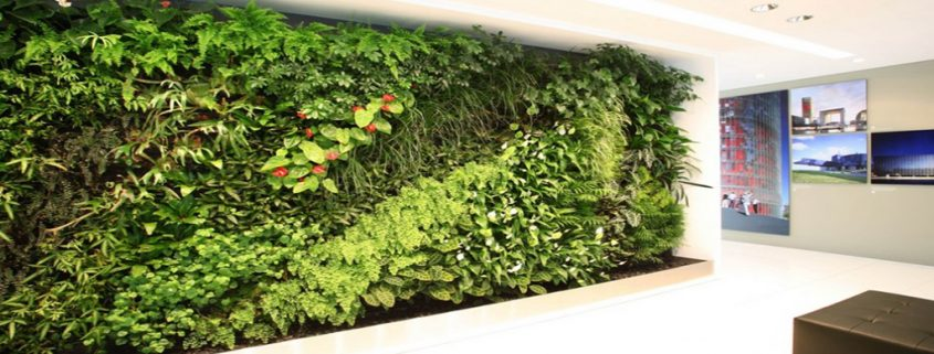 Natural Green Wall | Living Walls | Plants | Biophilic Design | Biophilia